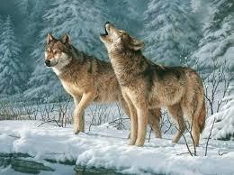 serigala.jpg